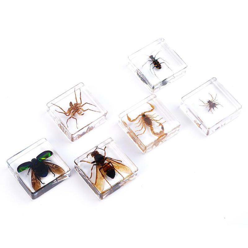 Modelo do espécime do inseto brinquedos aranhas besouros escorpião brinquedos educativos cedo para crianças adereços brinquedo do espécime da resina