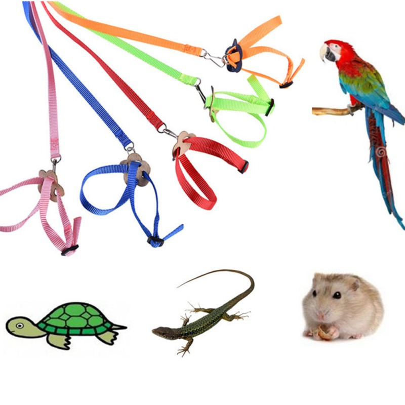 8-Typed Parrot Adjustable Bird Harness And Leash Outdoor Flying Anti-bite For Bird Parrot, Hamster, Lizard Pet Training Rope