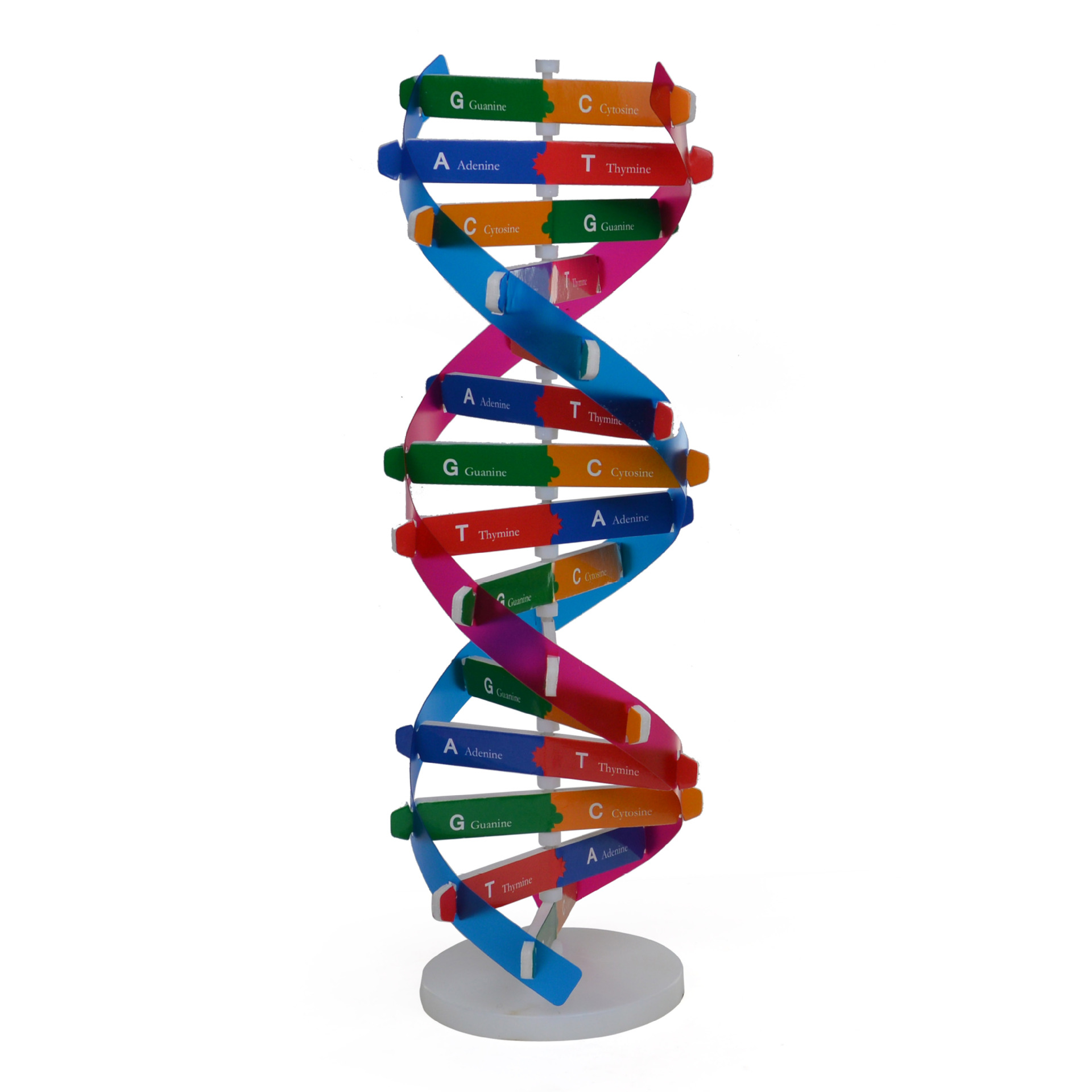 Human Gene DNA Model Double Helix Structure DNA Models Biological Science Experimental Equipment 3D Jigsaw Puzzle DNA Kits