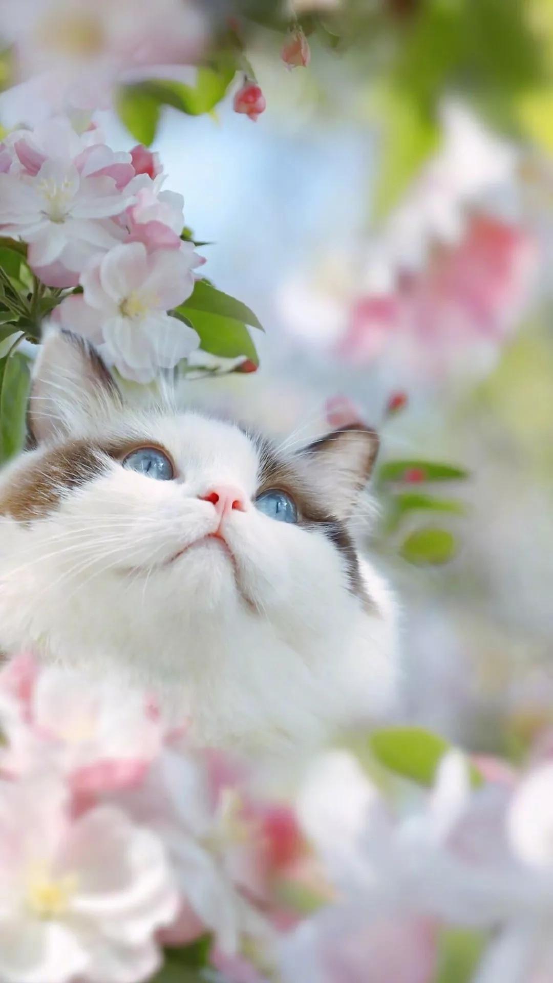 猫片壁纸 :生活不断拍打我们的脸皮,最后不是脸皮厚了,是肿了!插图73
