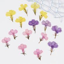 12 pçs natural pressionado lobelia flores secas planta real para diy resina jóias artesanato pulseira beleza arte do prego parede artesanato