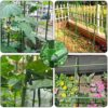 Gardening Stakesl Plant Supports Stakes Adjustable Plant Trellis Connector Clip Connecting Joint  Fixing Cross-Buckle