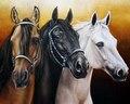 Cavalo estilo bordado contados kits de ponto cruz needlework-artesanato 14 ct dmc cor diy artes decoração artesanal três cavalos