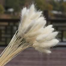 30 stems Dried Flower Bunny Tail Natural Plants Floral Accessories Bouquet Decoration Rabbit Photography Grass Home Decor
