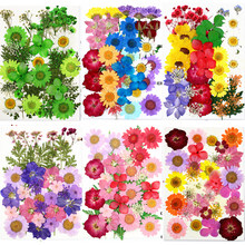 Traumdeutung pressionado flores pequenas flores secas scrapbooking seco diy preservado flor decoração casa mini bloemen flores secas