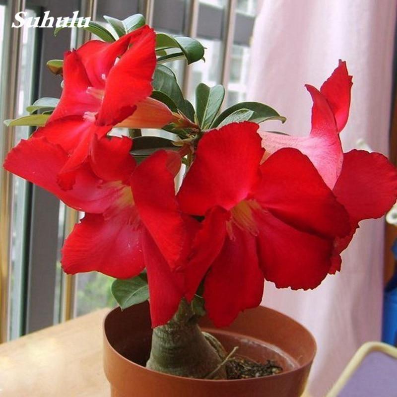 Artificial  5pcs Adenium Obesum Flower Planter