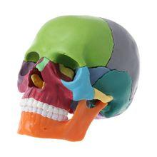 15pcs/set 4D Disassembled Color Skull Anatomical Model Detachable Teaching Tool 652E