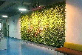 余杭室内绿植墙(化工)