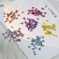 20 шт., сухие прессованные свечи Chloris Virgata Sw цветок на ногтях, натуральное растение для смолы, искусство в рамке, чехол для телефона