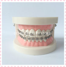 Dental Orthodontic teeth model/Adult tooth brushing instruction teeth model/Dental Ortho tooth model for education(China)