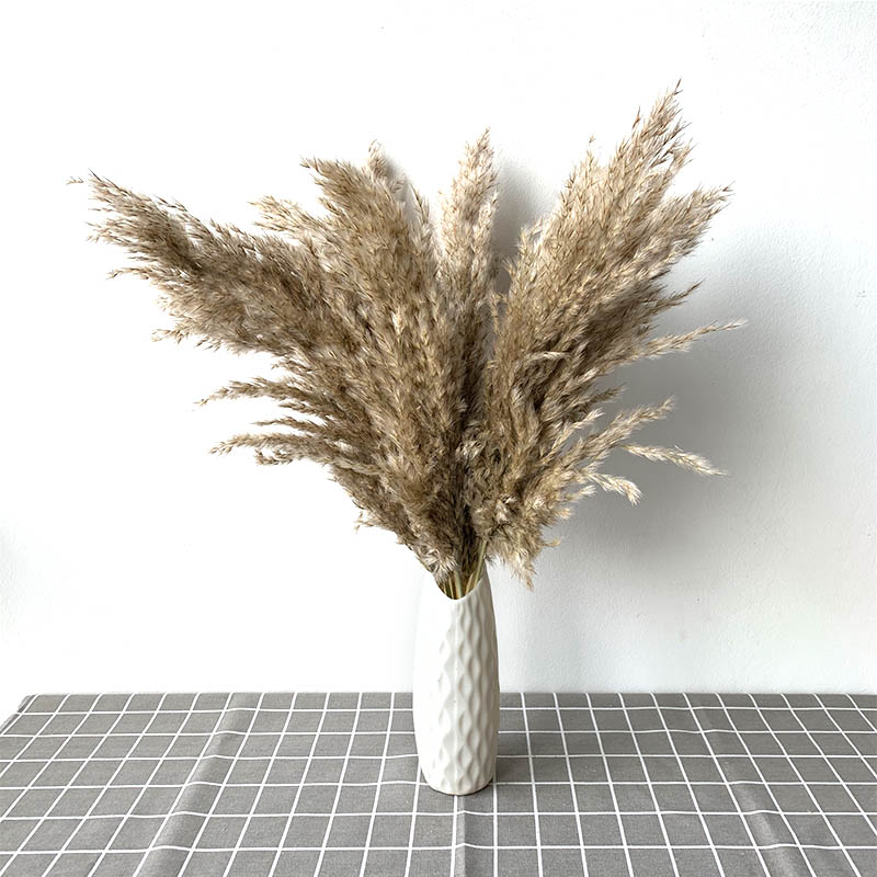 15 Pieces Natural Dried Pampas Grass Phragmites Communis Reed Flower Bouquet Plant Wedding Flower Bunch for Home Decorations,Off-White