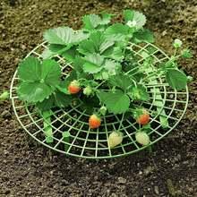 1 stück 27cm Erdbeere Unterstützt Stehen Handliche Erdbeeren Wachsenden Abnehmbare Halten Werk Off Rot in den Regnerischen Tagen