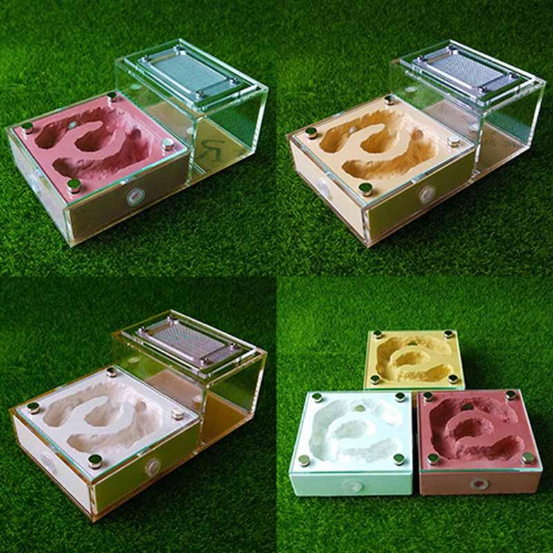 Magnetic Model Bionic Flat Plaster font b Pet b font Nest Castle Box Ants Farm House