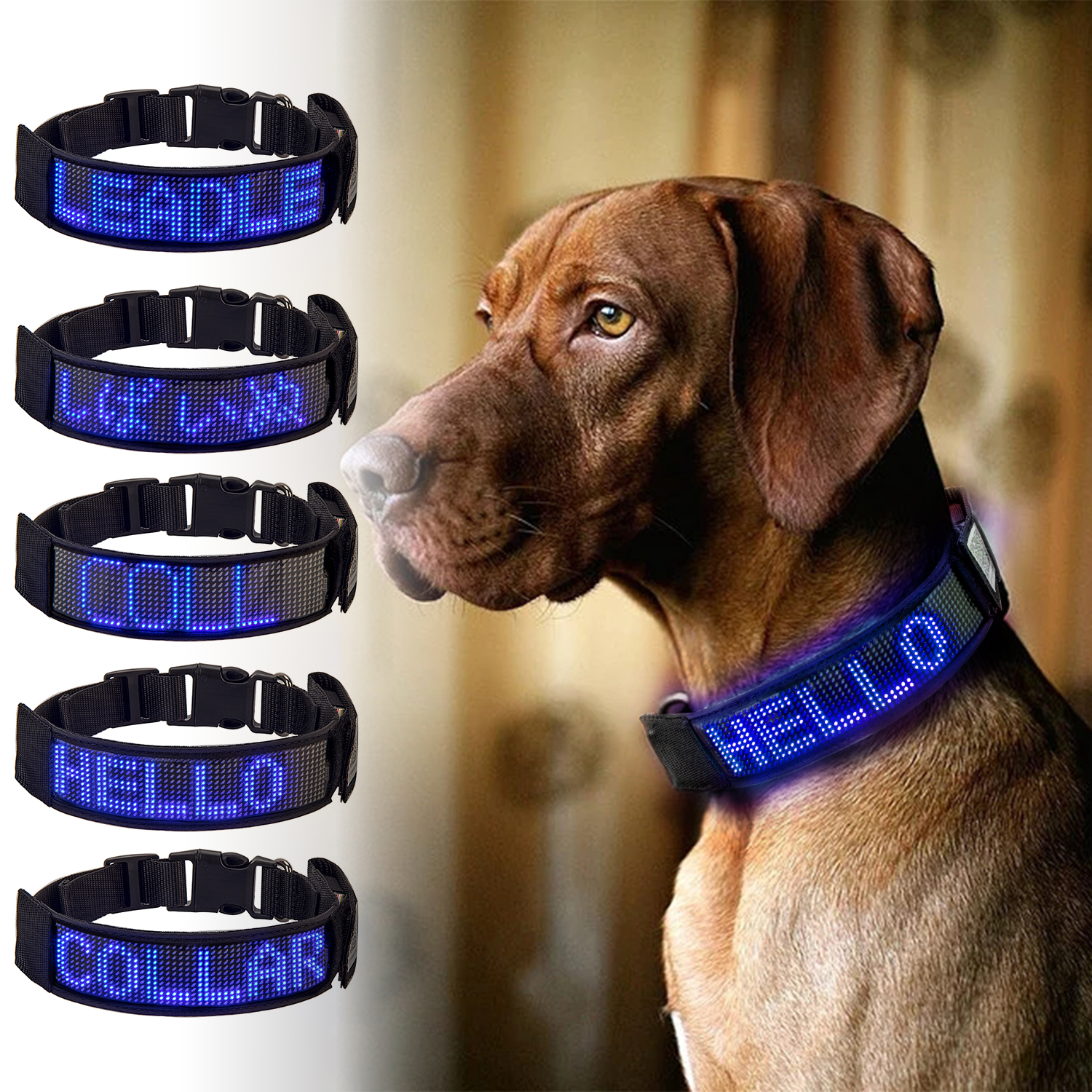 Led Pet Collars Rechargeable Programmable Fast Charge Easy Customize Ready to Wear Works in All Weather