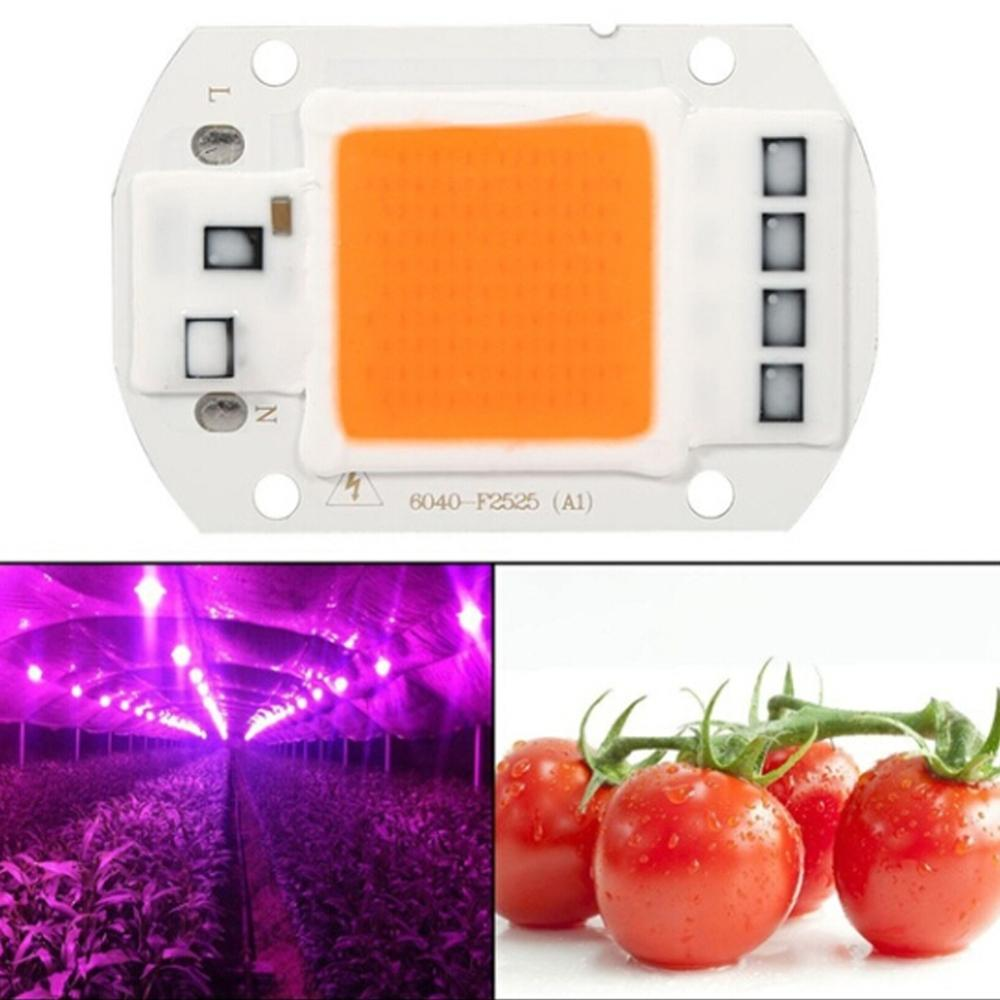 LED Grow COB Chip Phyto Lamp Full Spectrum AC110V 220V 20W 30W 50W For Indoor Plant Seedling Grow And Flower Growth Lamp