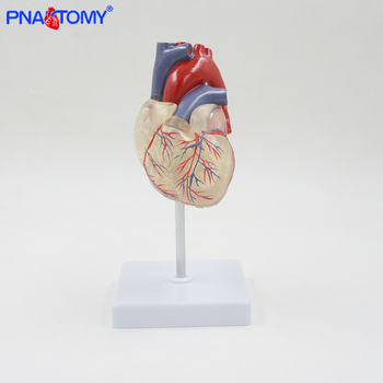 Transparent human heart anatomical model life size detachable with base plastic made medical teaching tool PNATOMY transparent human heart anatomical model life size detachable with base plastic made medical teaching tool pnatomy