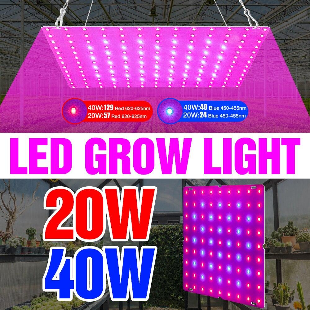 Indoor phyto lâmpada 20w 40w led cresce a luz led crescer tenda espectro completo para plantas de hidroponia semente flor lampe ue eua reino unido plug