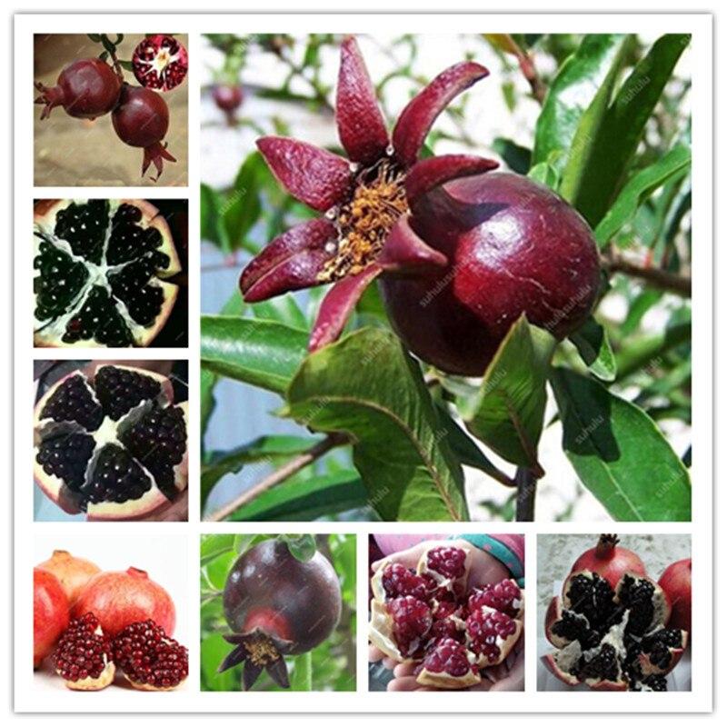 30 Pcs Rare Black Pomegranate Bonsai Very Sweet Delicious Fruit Bonsai Succulents Tree Bonsai Plant For Home Garden Pot