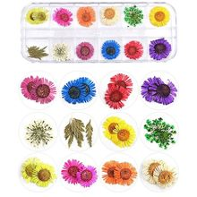 1 Box Real Pressed Flower Leaves Dried Daisy Resin Art Jewelry Making