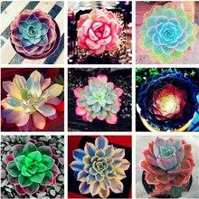 50Pcs Rare Colorful Succulent Plant Seeds Bonsai Home Aromatic Flower Essence Nature Garden Lotus Lip Mask DN9Z