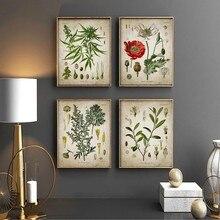 Posters botânicos vintage papoula coca recreativa planta de drogas arte da parede farmácia decoração pintura presente médico