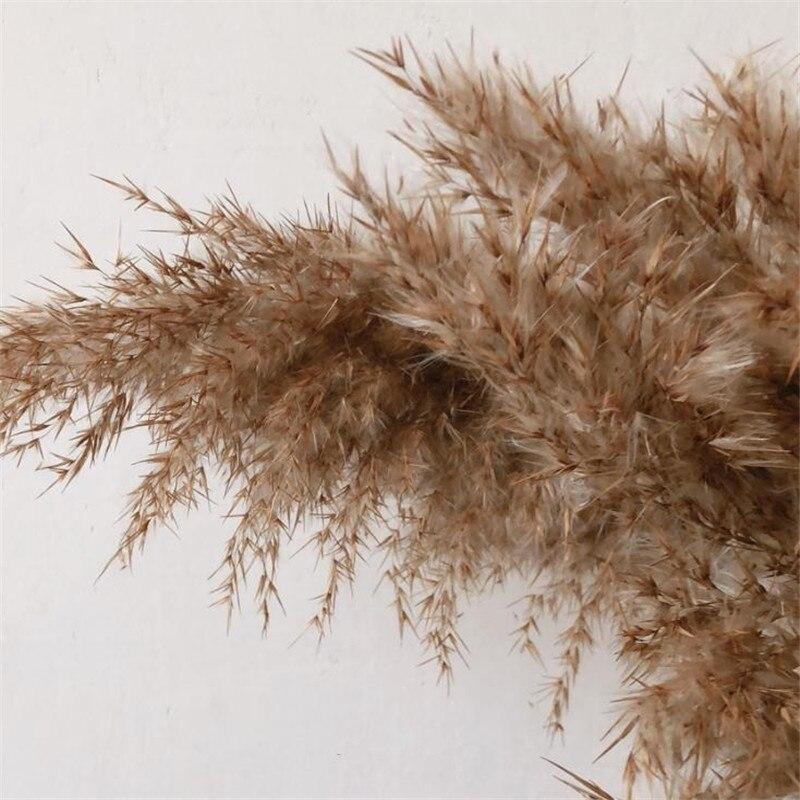 20 pçs flores secas nutural pampas grama