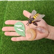 Simulação criaturas fascinantes animais de abelha modelo ciclo de vida de uma abelha mel figuras de ação brinquedos educativos em miniatura