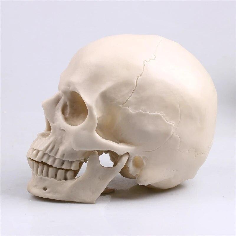 P-Chama 1:1 Crânio Animal Escultura Estátua Decoração de Halloween Adereços Bar balcão decoração de casa Resina Artesanato Pintura Médica
