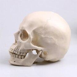 P-chama 1:1 crânio animal estátua escultura halloween decoração resina artesanato pintura adereços médicos contador de barras decoração para casa