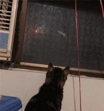 Puntero láser de 5mw y 500 metros, gran potencia, verde, azul, rojo, puntero láser de enfoque potente, juguete de adiestramiento de gatos