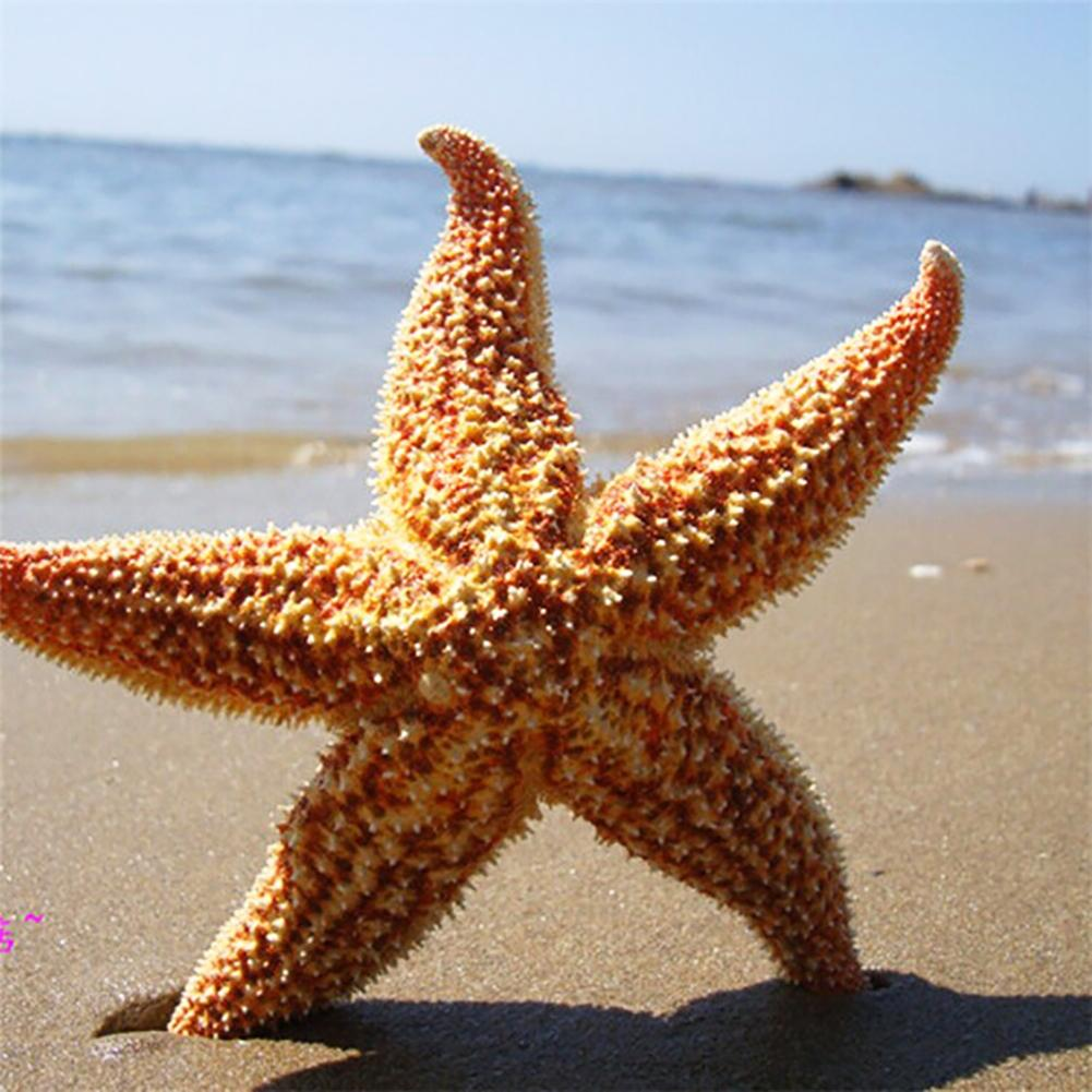 2Pcs Dried Star Fish Sea Star Beach Craft Wedding Party Home Decoration Gift Crafts Starfishes