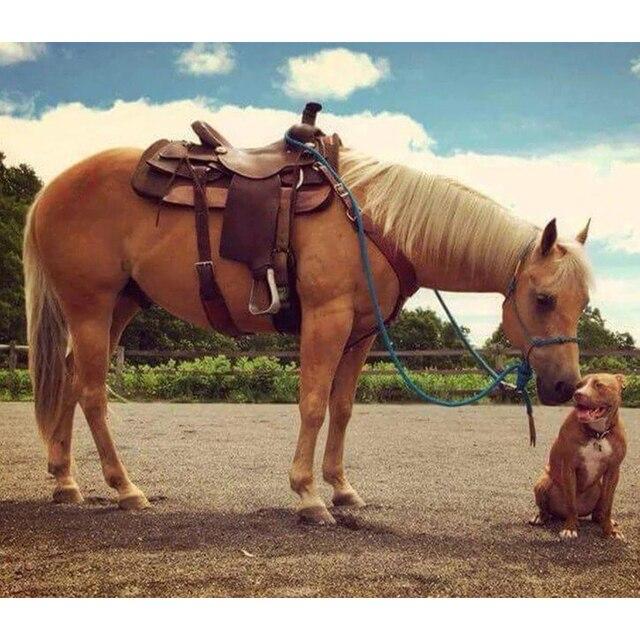 Broderie diamant chevaux et chien