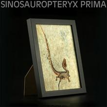 Vitae Sinosauropteryx Prima Fossil Photo Frame Dinosaur Toys Animal Collector Decoration Adults Gift