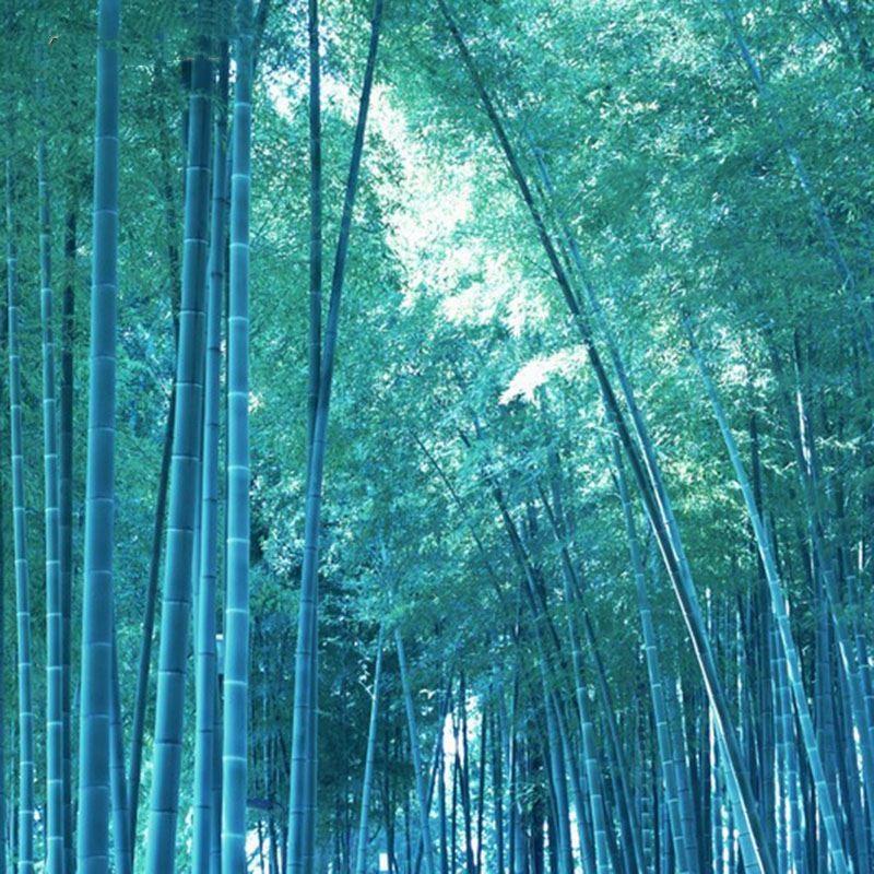 Plant Flower Bath Salts Rare Blue Bamboo Essence 30Pcs XZZ-260