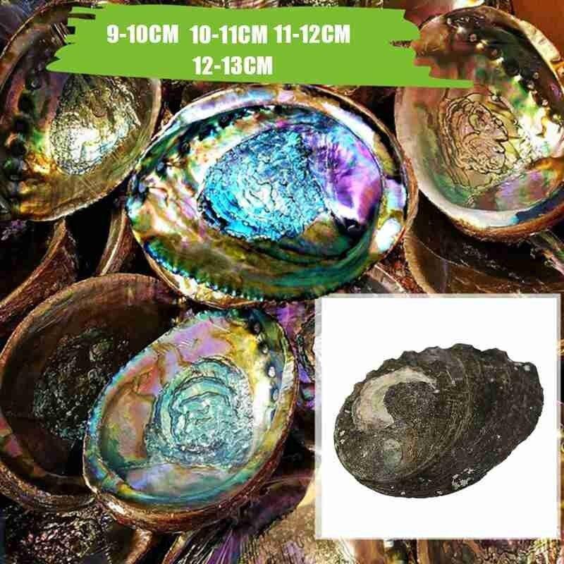 9-13 см, натуральный Абалон, ракушка, морским обитателям, естественные ракушки раковины Diy аквариума пейзаж ремесленные украшения морские ули...