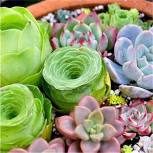 Mini Plants Vivid Cactus Succulent Home Decoration Bonsai Plant with Vase for Office Table Indoor Plants 100pcs