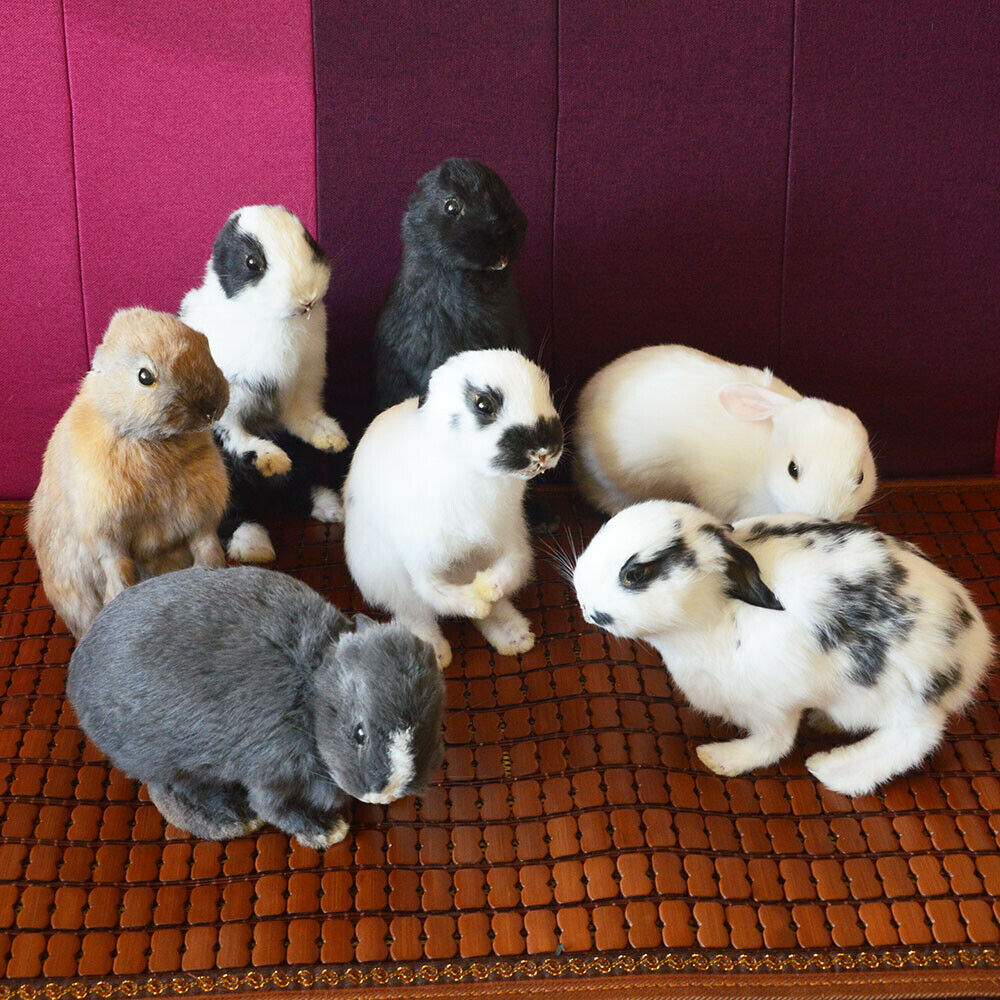 Taxidermia recheio coelho, coelho pele espécime ensino/decoração 5 pces aleatórios