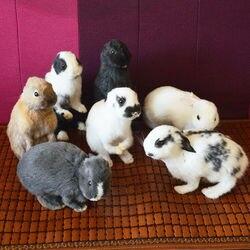 Taxidermy füllung kaninchen, bunny fell probe Lehre/Dekoration 5 stücke zufällig