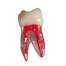 2pcs Dental Tooth Model Root Canal RCT Practice Pulp Cavity Clear Resin Teaching Teeth Model For Dentistry Therapy Tools