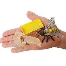 Simulação inseto abelha crescimento ciclo modelo estatueta, 4 peças conjunto mostra ciclo de vida de uma abelha bonito brinquedos educativos em miniatura