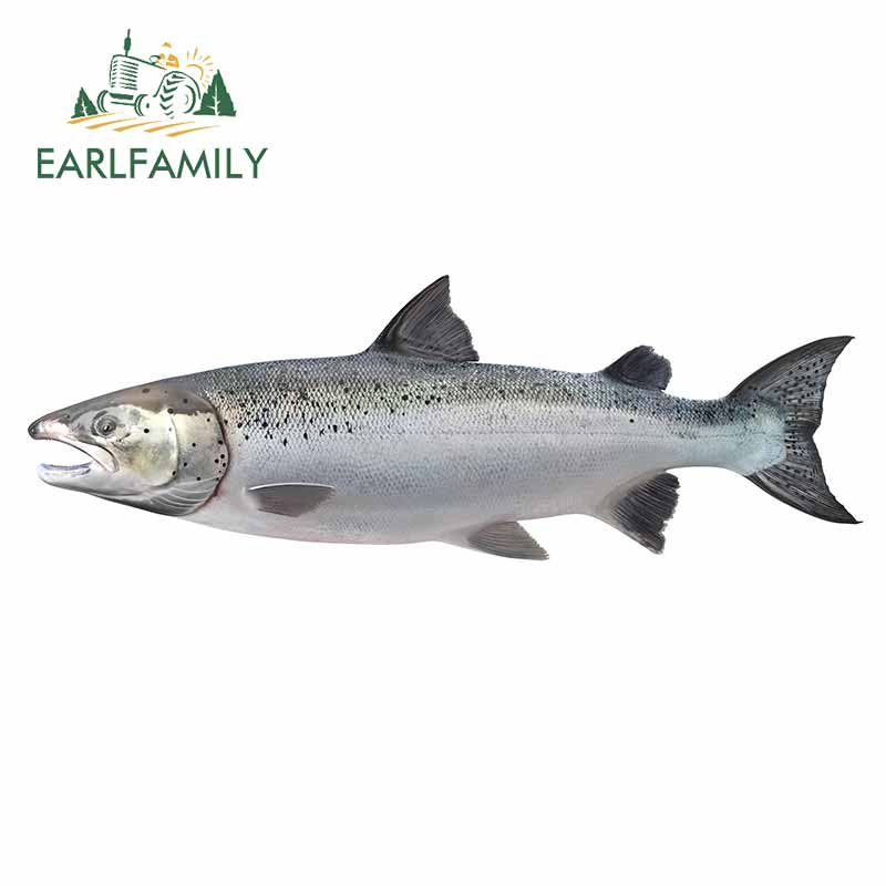 EARLFAMILY 13cm For Salmon Car Decal Personality Car Stickers Motorcycle Vinyl Material Scratch-Proof For JDM SUV RV Decor(China)