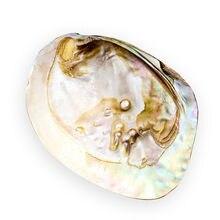 13-18cm natural de água doce pérola concha oyster mãe de pérola náutica casa decoração praia concha de molusco para diy jóias fazendo artesanato
