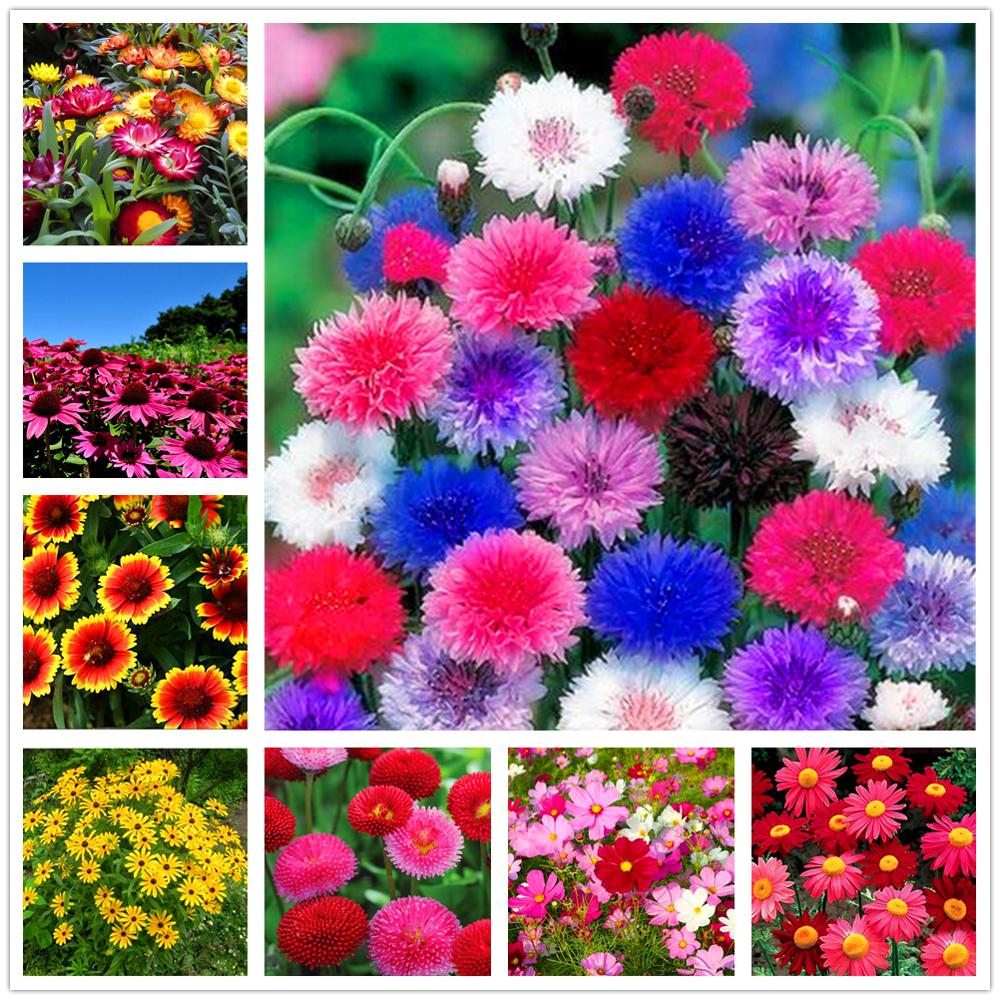 Plant Flowers Bath Salts Fragrant Echinacea Essence 100Pcs XZZ-182