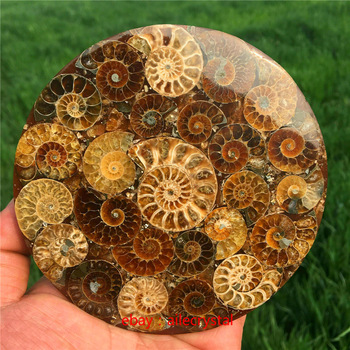 Natural Ammonite Disc Fossil Conch Specimen Healing +Stand 1pcs 1