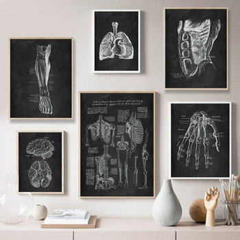 Human Anatomy Artwork Medical Clinic Wall Picture Skeleton Organ Muscle System Vintage Canvas Print Body Education Poster 4