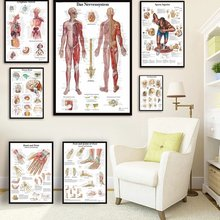Human Anatomy Muscles System Art Poster Print Body Map Canvas Wall Pictures for Science Medicine Bedroom Decor