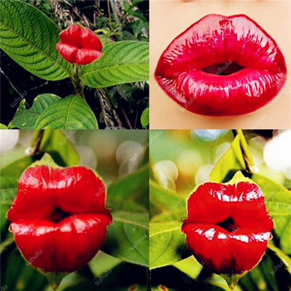 New Arrival 300 Pcs Red Lips Flower Bonsai Rare Flowering Pots Japanese Home Garden Chili Red Flower Perennial Plants