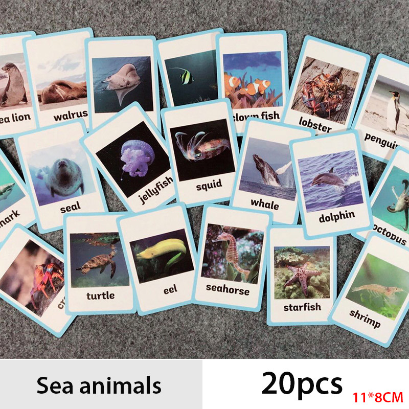 Sea Animals Learn English Card English Learning Word Card Darly Education Children's Word Pocket Card Kids Games Learning Toys