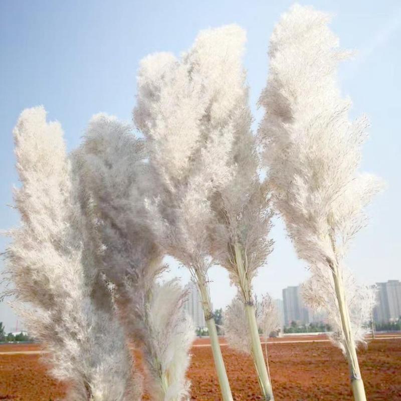 1Pc Getrocknete Natürliche Pampas Gras Flauschigen Getrocknete Hochzeit Natürliche Pflanzen Weiße Getrocknete Blume Bouquet Für Home Weihnachten Dekoration 55cm