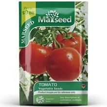 American Heirloom MARSEED Tomato Vegetables Seedsplants Seedling Garden Outdoor